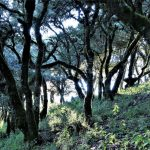 CuatroPalos Wald 150x150 - Die Sierra Gorda - Das grüne Juwel im Herzen Mexikos