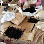 Vanille Gaja Arbeiter web 150x150 - Veracruz - Auf den Spuren der Vanille in Papantla