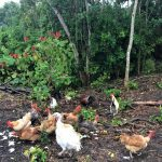 Xanath Huehner web 150x150 - Veracruz - Auf den Spuren der Vanille in Papantla