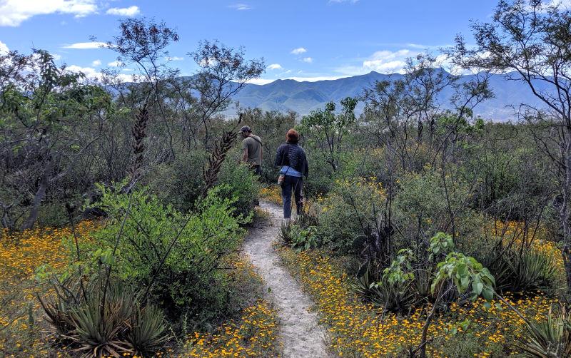 Blumen - Höhlenmalerei in Oaxaca - Zeitreise in die Welt der Nomaden