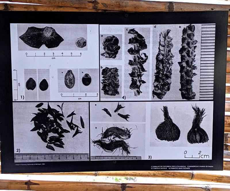 Image semillas - Höhlenmalerei in Oaxaca - Zeitreise in die Welt der Nomaden